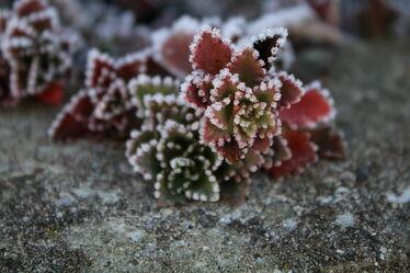 Bild mit Natur, Winter, Eis, Pflanze, nahaufnahme, Bodendecker