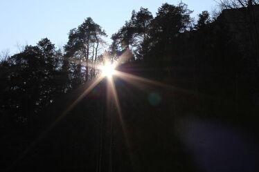 Bild mit Natur, Sonne, Wald