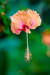 Bild mit Orange, Pflanzen, Blumen, Frühling, Makrofotografie, Flower, Flowers, detailaufnahme, Blumenfotografie, Marko