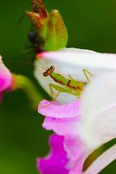 Bild mit Säugetiere, Pflanzen, Blumen, Frühling, Makrofotografie, Flower, Flowers, detailaufnahme, Blumenfotografie, Marko
