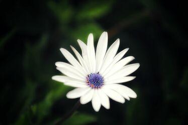 Bild mit Pflanzen, Blumen, Lila, Frühling, Makrofotografie, Tulpe, Flower, Flowers, Blumenfotografie, Marko