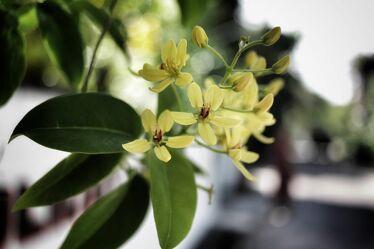 Bild mit Pflanzen, Blumen, Frühling, Sommer, Makrofotografie, Flower, Flowers, detailaufnahme, Blumenfotografie, Marko