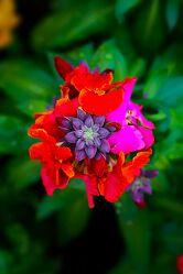Bild mit Pflanzen, Blumen, Frühling, Makrofotografie, Flower, Flowers, Bunt, detailaufnahme, Blumenfotografie, Marko