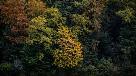 Bild mit Farben, Gelb, Grün, Rot, Herbst, Wald, Baum, Märchenwald, Schweiz