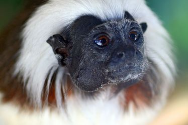 Bild mit Tiere,Säugetiere,Primaten,Menschen,Natur,Menschenaffen,Schimpansen,Makaken,Affe,Tier,Bonobo,Zwergschimpanse,Hominidae,Pan troglodytes,Pan paniscus,Affen