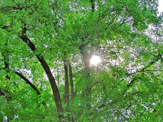 Bild mit Farben, Natur, Grün, Pflanzen, Gräser, Landschaften, Bäume, Jahreszeiten, Wälder, Frühling, Herbst, Wald, Wald, Lichtung, Baum, Baumkone