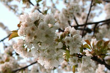 Bilder mit Frühling