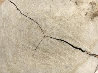 Eichen Holz Struktur