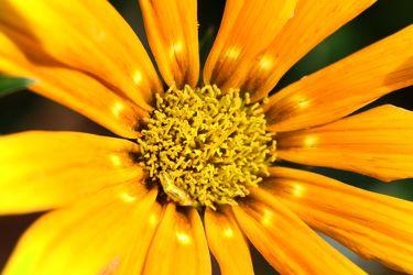 Bilder mit Gelb