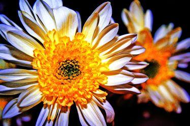 glowing nightflower