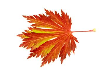 Bilder mit Blätter
