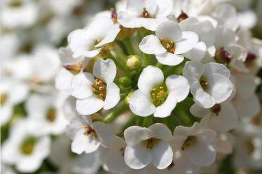 Makro Flower 2