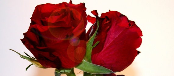 Bilder mit Rosen