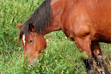 Bilder mit Pferde