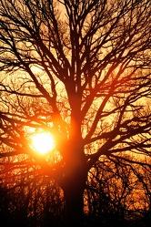 Bild mit Farben,Orange,Natur,Pflanzen,Landschaften,Himmel,Bäume,Sonnenuntergang,Sonnenuntergang,Sonnenaufgang,Abendrot,Morgenrot,Wald,Baum,Eiche,Tree,Trees,Sonnenschein durch eine Baumkrone