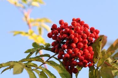Bild mit Natur,Pflanzen,Bäume,Früchte,Lebensmittel,Essen,Blumen,Beeren