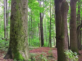 Bilder mit Wald