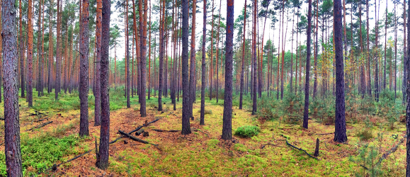 Bild mit Natur, Grün, Bäume, Holz, Wald, Lichtung, Baum, Panorama, Waldweg, Nadelbaum, Landschaft, Märchenwald, Märchen Wald, Waldblick, Blick in den Wald, Forstwirtschaft, Nadelwald, Forest, Waldbild, Waldbilder, Wald Bild, Wald Bilder