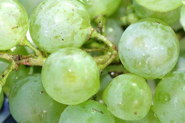 Weintrauben 5