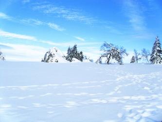 Bild mit Natur, Landschaften, Bäume, Winter, Schnee, Wälder, Wald, Baum, Landschaft, Weihnachten, winterlandschaft, Winterlandschaften, Winterbilder, Kälte, Frost, Winterbild, winterwunder