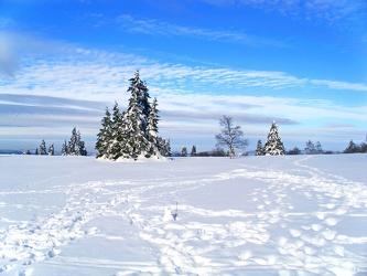 Bild mit Farben, Natur, Pflanzen, Himmel, Bäume, Nadelbäume, Jahreszeiten, Winter, Wetter, Schnee, Wolken, Tageslicht, Blau, Tanne, Kiefern, Fichten, winterlandschaft