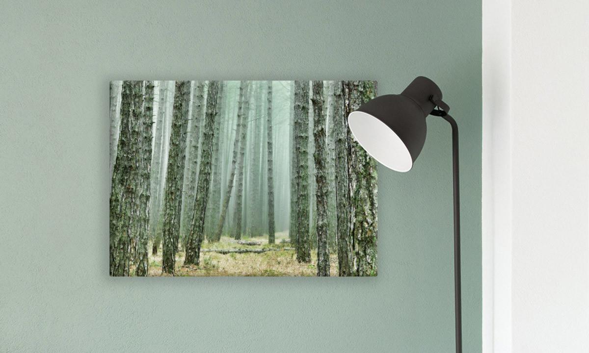 Leinwandbild Wald als Impression an der Wand